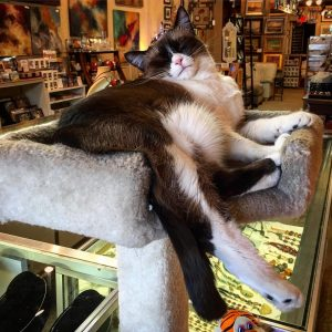 Art shop cat! Now THAT is relaxed! cats catsofinstagram