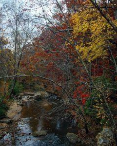 The last of the leaves falling on Rottenwood Creek runninghellip