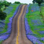 Cycling Tour, Texas Hill Country