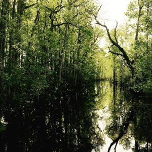 swamp, travel, cycling