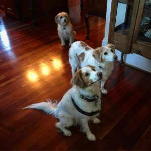 All 3 pups looking for a treat! dogs dogsofinstaworld