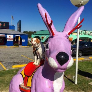 Sadie got to check out the Jackalope at South ofhellip