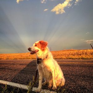 Vote on your favorite Sadie the super dog pic! dogshellip