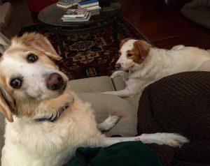 Sadie is hosting 2 evacuees from Hurricane Mathew This ishellip