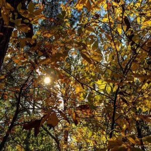 Sun peeking through the yellow leaves on my Vinings runhellip
