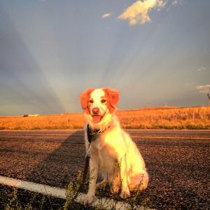 Sadie the super dog 2! dogs dogsofinstagram travel