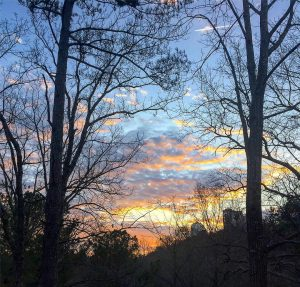 The trees are closing in our sunset views!