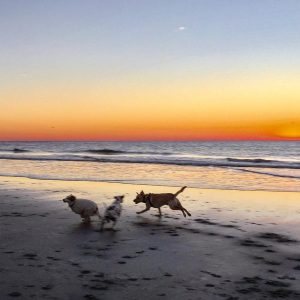 Puppy action at the beach! sunrise dogs dogsofinstagram