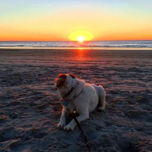 Do I really have to leave mom? dogs beach sunrisehellip
