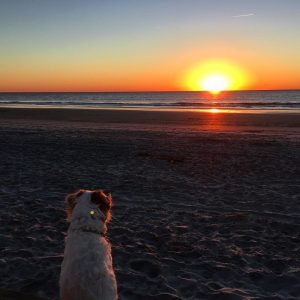 Sadie watching her last sunrise on Wrightsville beach dogs dogsofinstagram