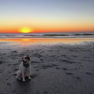 More Sadie sunrise at the beach pics! dogs dogsofinstagram