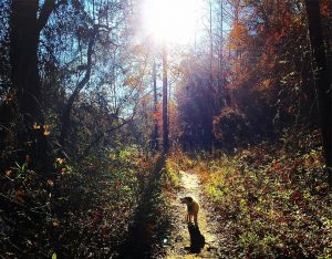 Sadie getting her offleash trail time along the Chattahoochee! marathontraininghellip