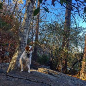 ALERT! I spy a squirrel in those woods mom! hikinghellip